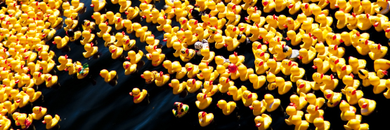 United Way Duck Race